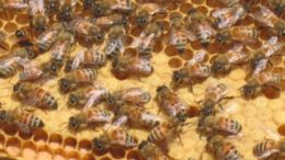 New Jersey Passes A Law to Protect the State's Bee Population